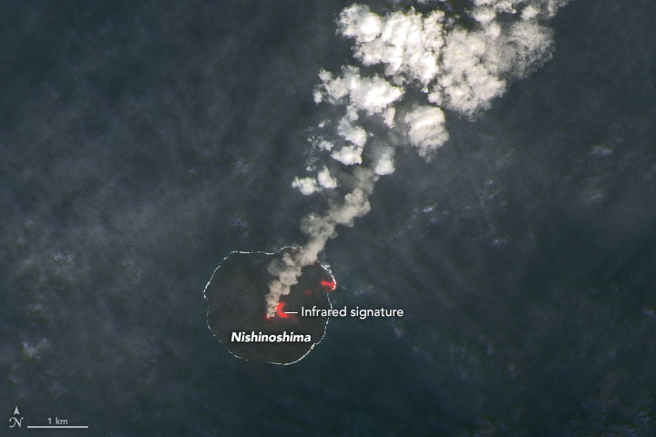 NASA Earth Observatory image of NIshinoshima volcano on 26 Jan 2020 by Joshua Stevens, using Landsat data from the U.S. Geological Survey
